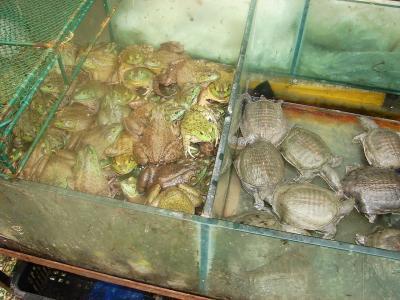 20080820151025-tortuga-o-escuerzo.jpg