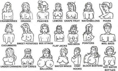 20110117180716-boob-chart.jpg