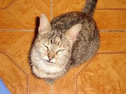 20070711150455-gato.jpg