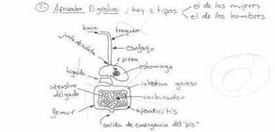 20100128121419-aparato-digestivo.jpg